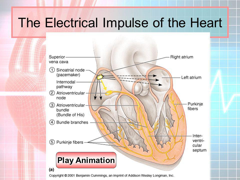 The Electrical Impulse of the Heart
