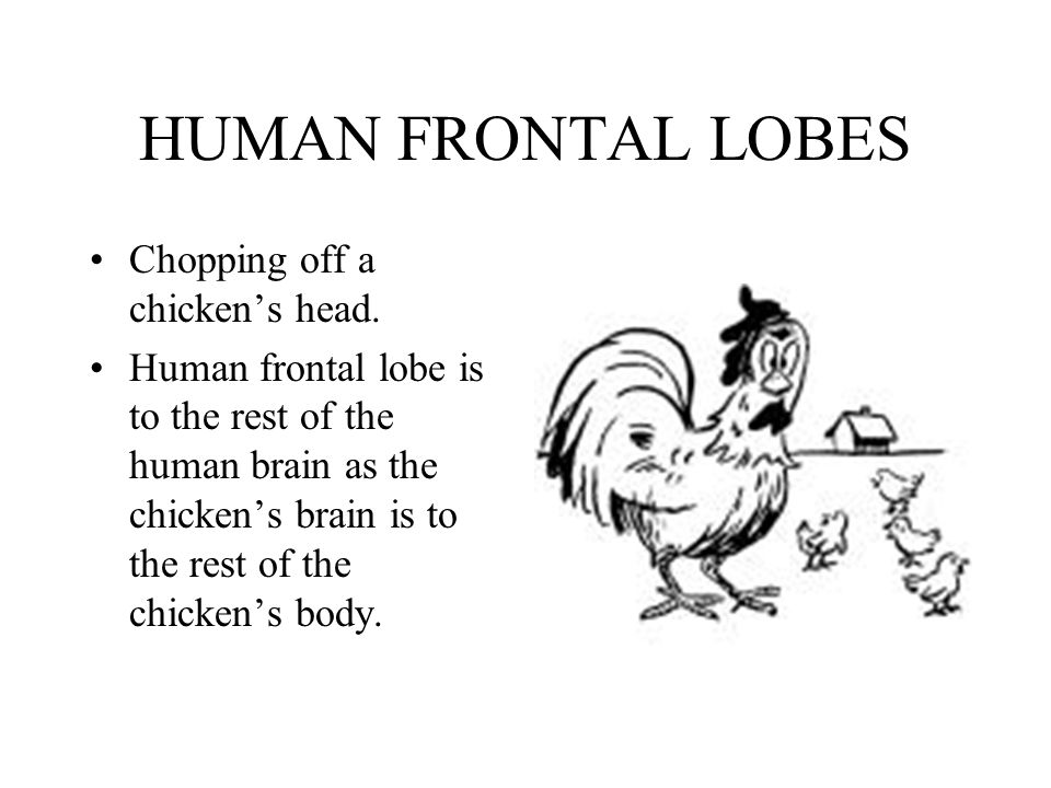 HUMAN FRONTAL LOBES Chopping off a chicken's head.
