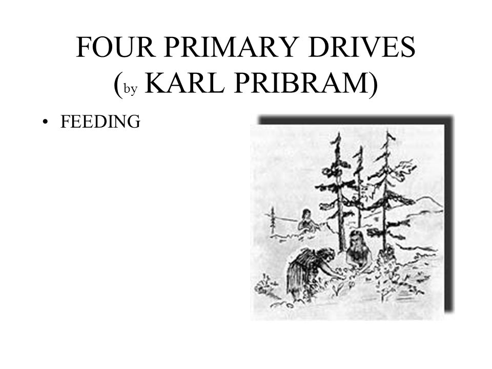 FOUR PRIMARY DRIVES (by KARL PRIBRAM)