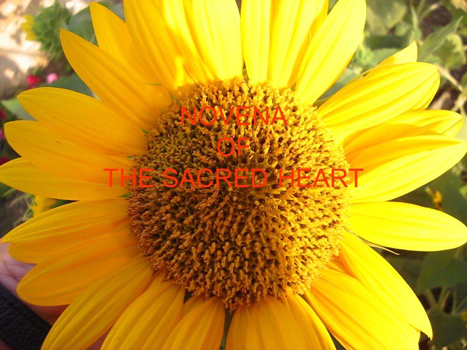 NOVENA OF THE SACRED HEART
