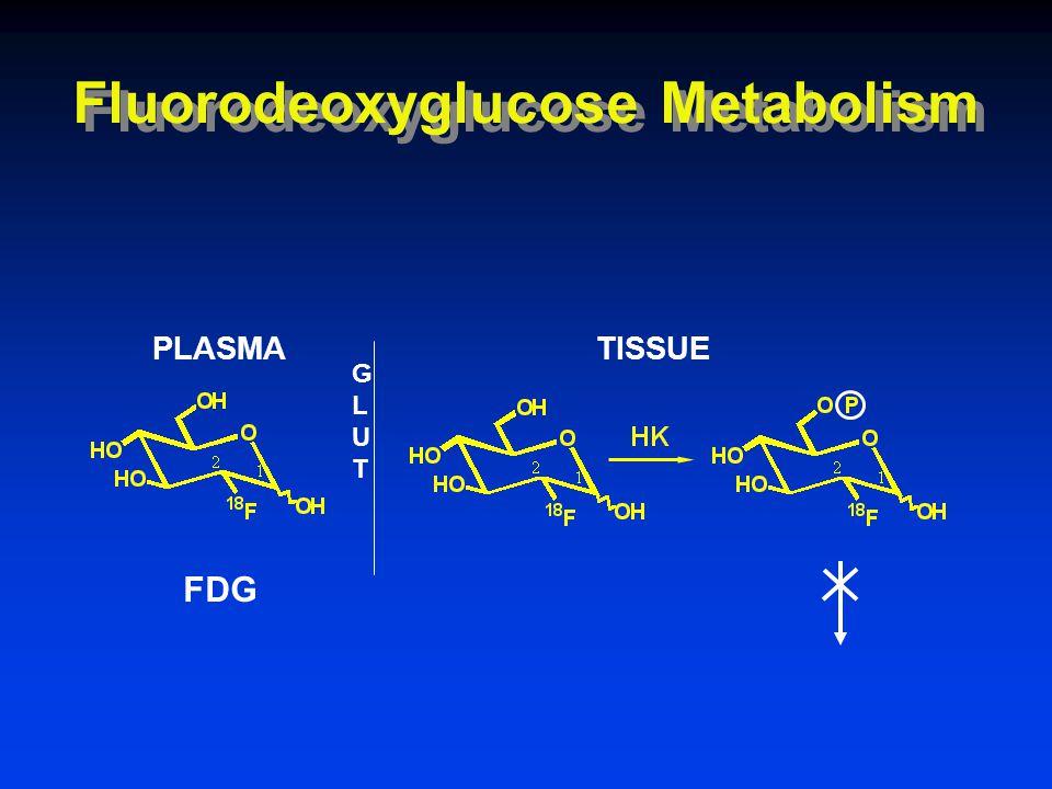 Fluorodeoxyglucose Metabolism