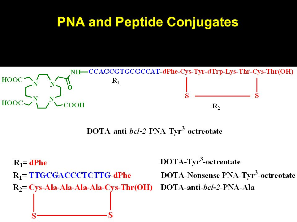 PNA and Peptide Conjugates