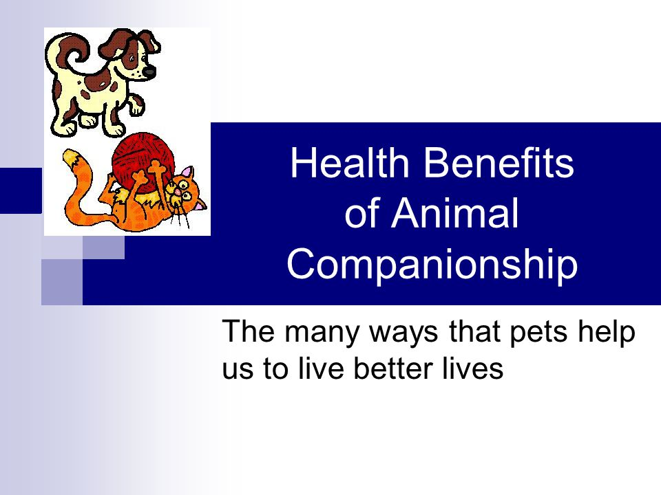 Health Benefits of Animal Companionship