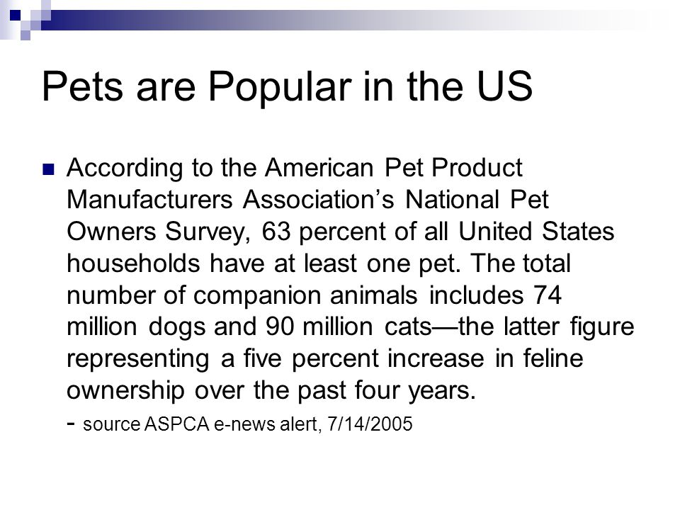 Pets are Popular in the US