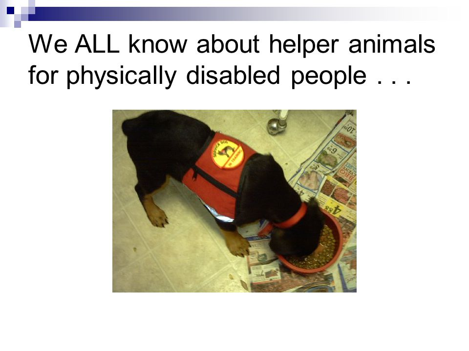 We ALL know about helper animals for physically disabled people . . .