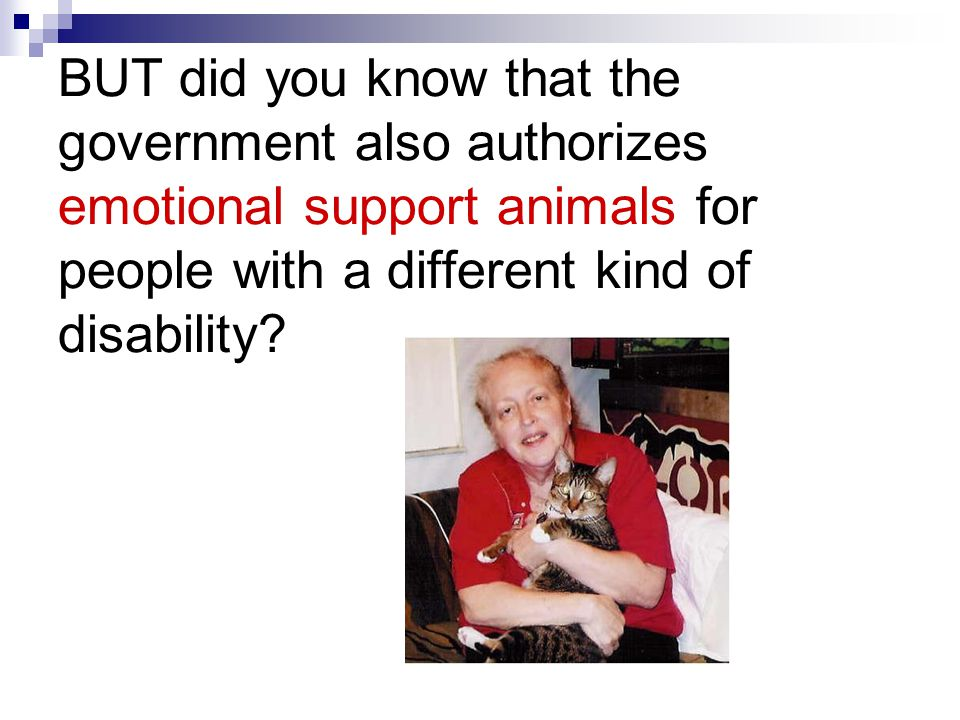BUT did you know that the government also authorizes emotional support animals for people with a different kind of disability