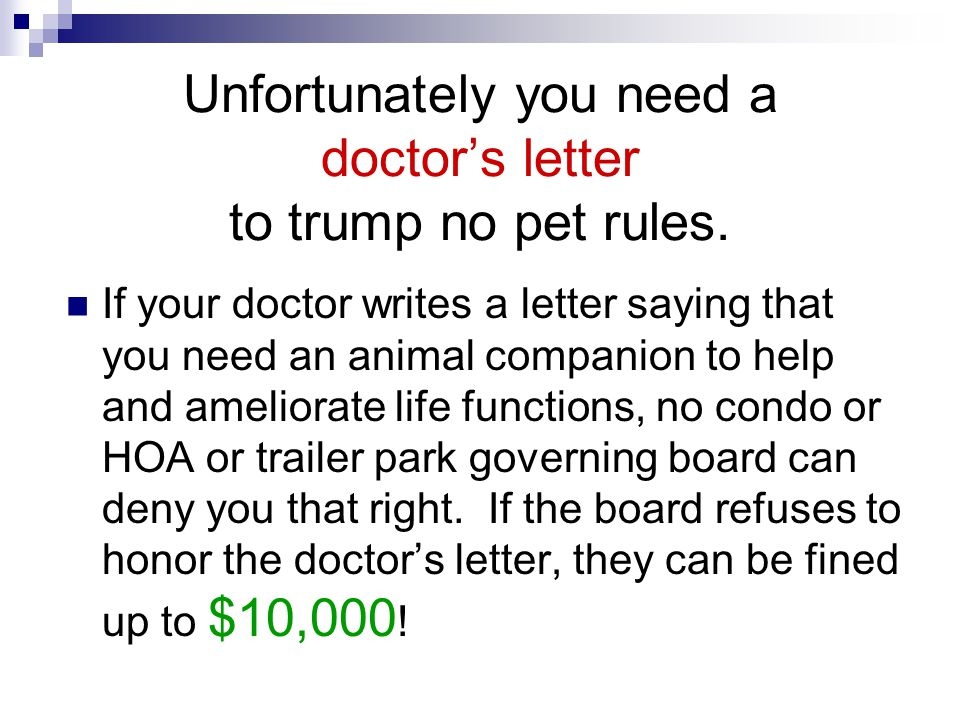 Unfortunately you need a doctor's letter to trump no pet rules.