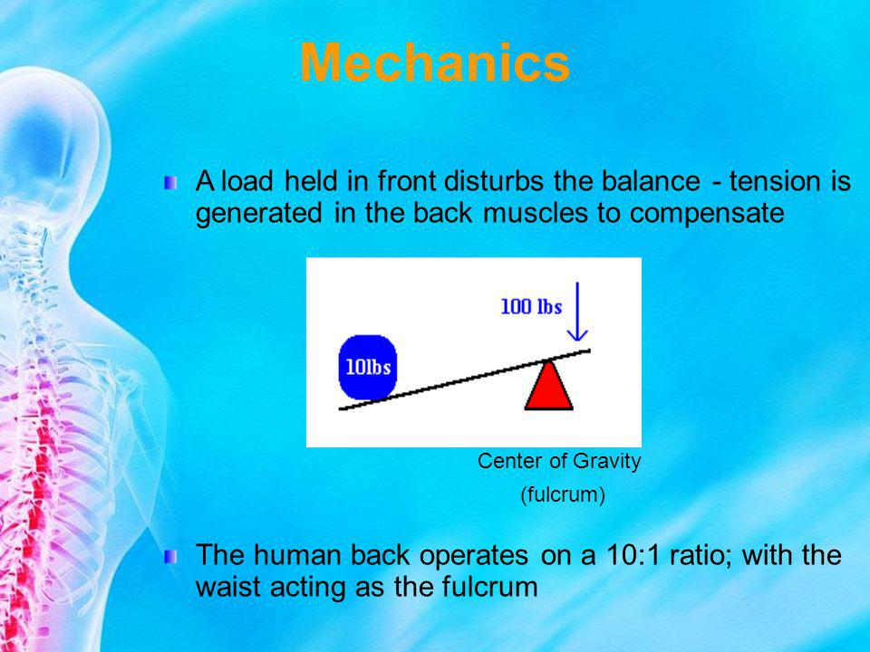 Mechanics A load held in front disturbs the balance - tension is generated in the back muscles to compensate.