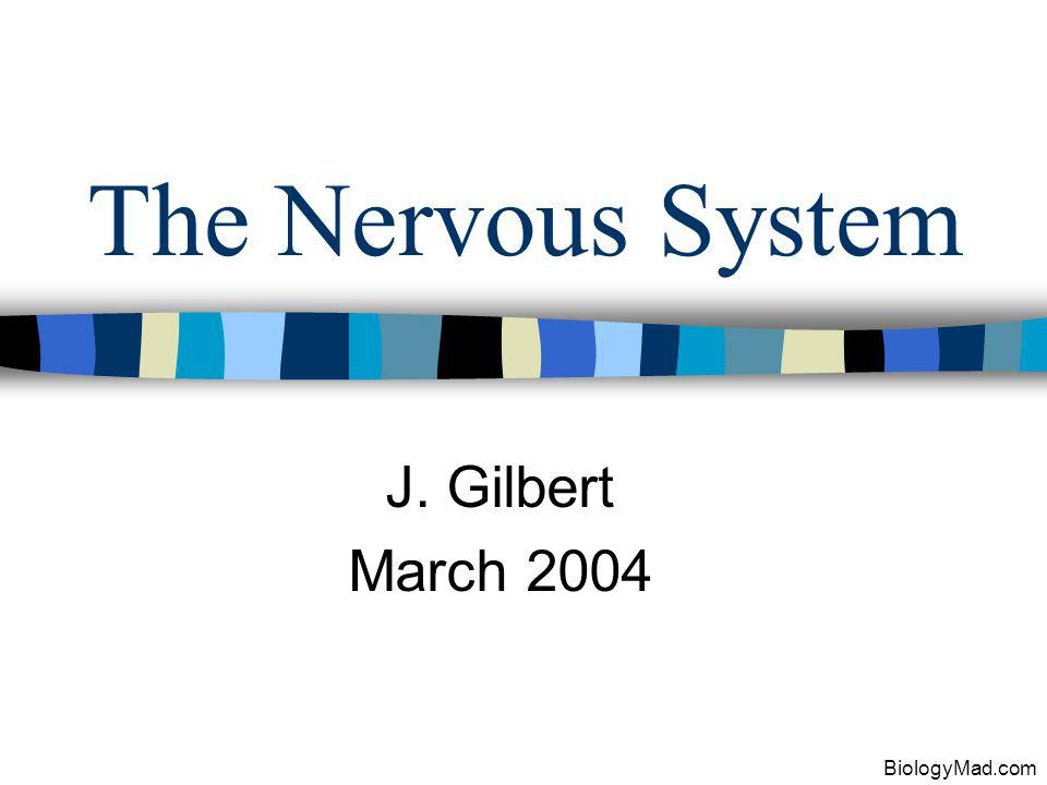 The Nervous System J. Gilbert March 2004 BiologyMad.com