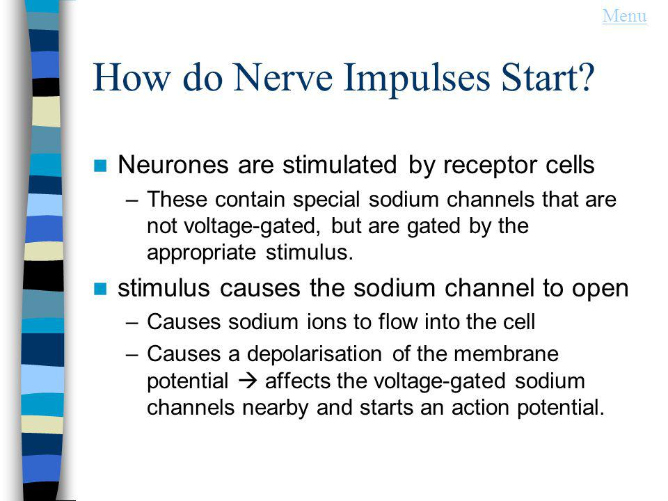 How do Nerve Impulses Start