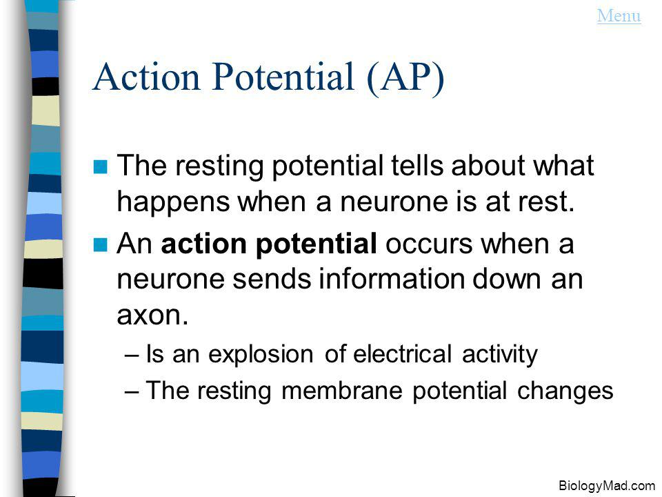 Menu Action Potential (AP) The resting potential tells about what happens when a neurone is at rest.