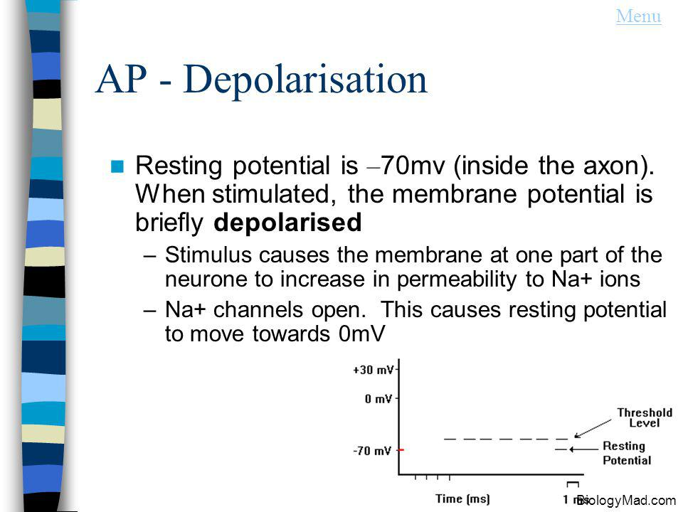 Menu AP - Depolarisation. Resting potential is –70mv (inside the axon). When stimulated, the membrane potential is briefly depolarised.
