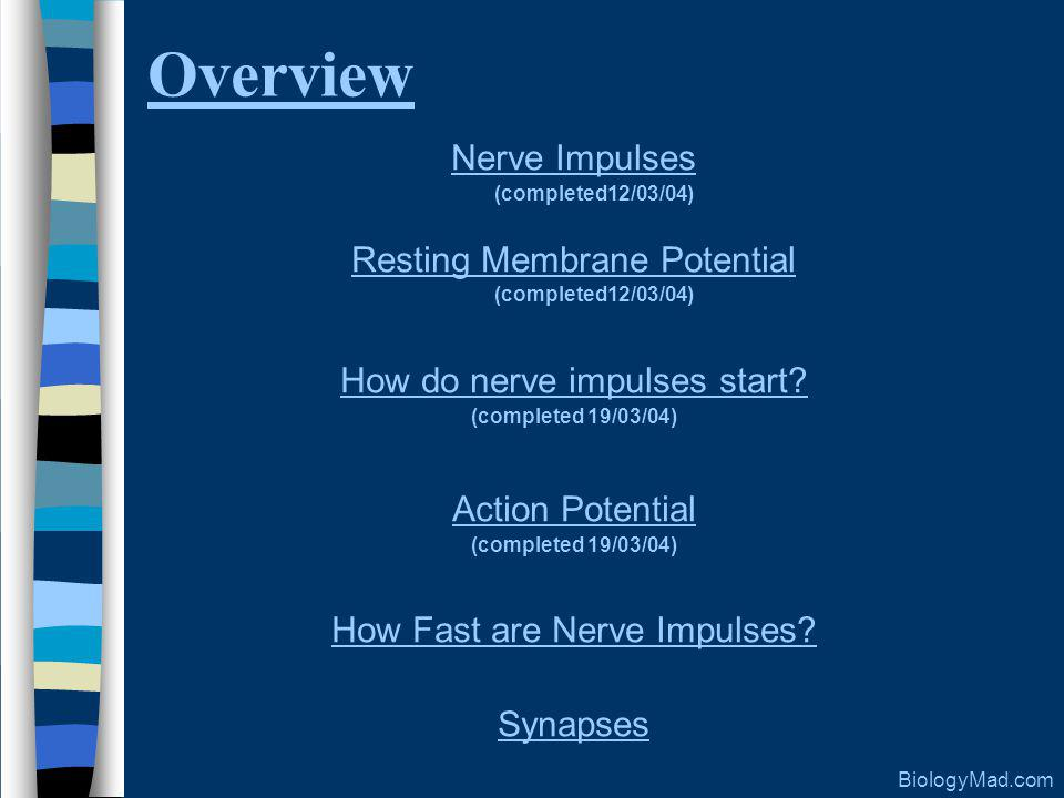 Overview Nerve Impulses Resting Membrane Potential