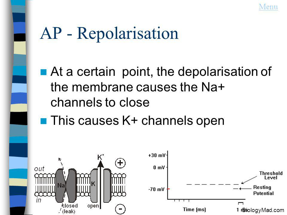 Menu AP - Repolarisation. At a certain point, the depolarisation of the membrane causes the Na+ channels to close.