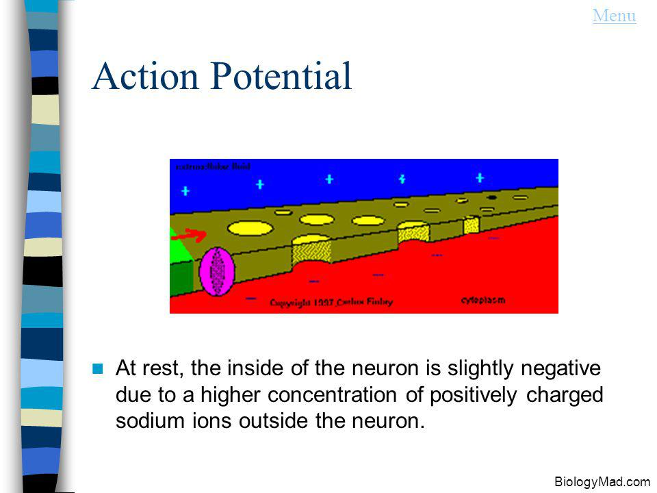 Menu Action Potential.