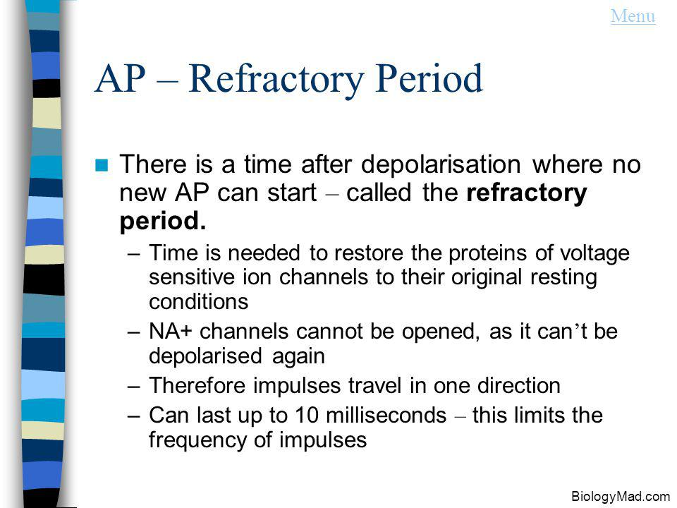 Menu AP – Refractory Period. There is a time after depolarisation where no new AP can start – called the refractory period.