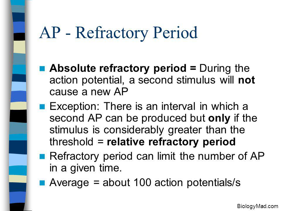 AP - Refractory Period Absolute refractory period = During the action potential, a second stimulus will not cause a new AP.