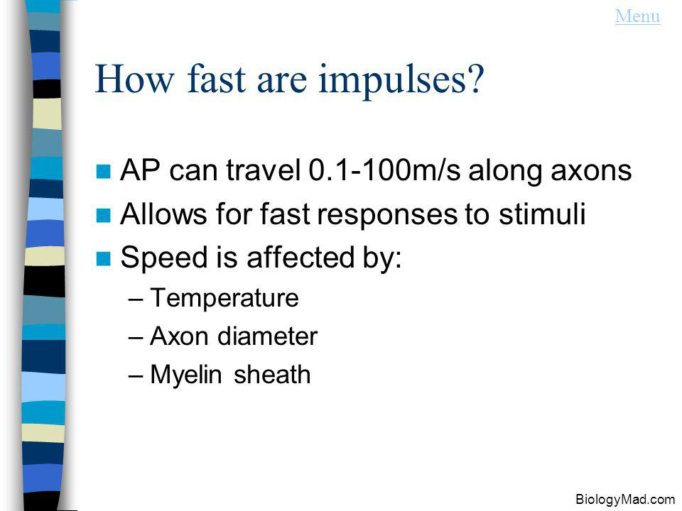 How fast are impulses AP can travel 0.1-100m/s along axons