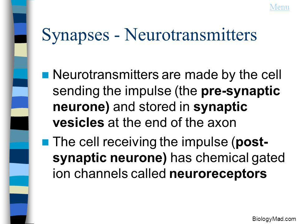 Synapses - Neurotransmitters
