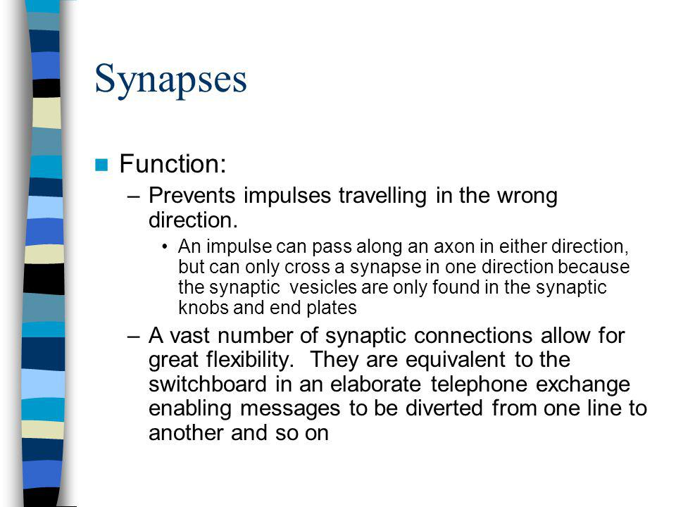 Synapses Function: Prevents impulses travelling in the wrong direction.