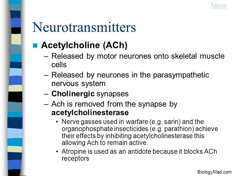 Neurotransmitters Acetylcholine (ACh)