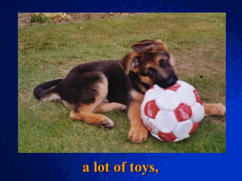 a lot of toys,