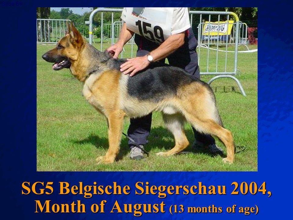 SG5 Belgische Siegerschau 2004, Month of August (13 months of age)