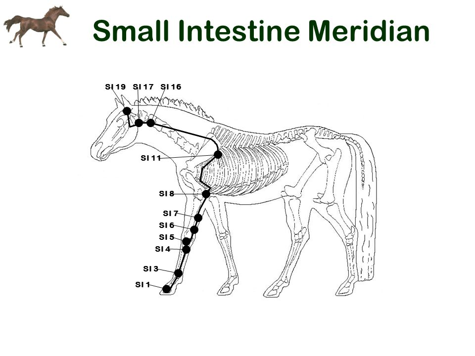 Small Intestine Meridian