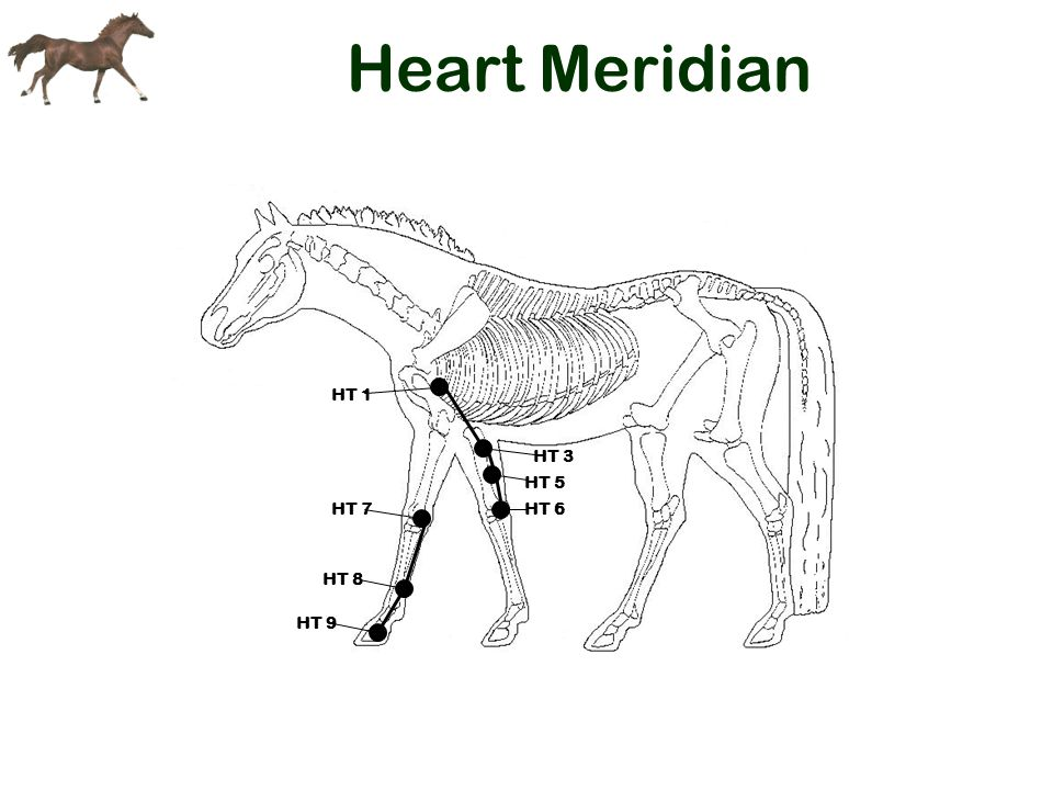Heart Meridian HT 1 HT 3 HT 5 HT 6 HT 7 HT 8 HT 9