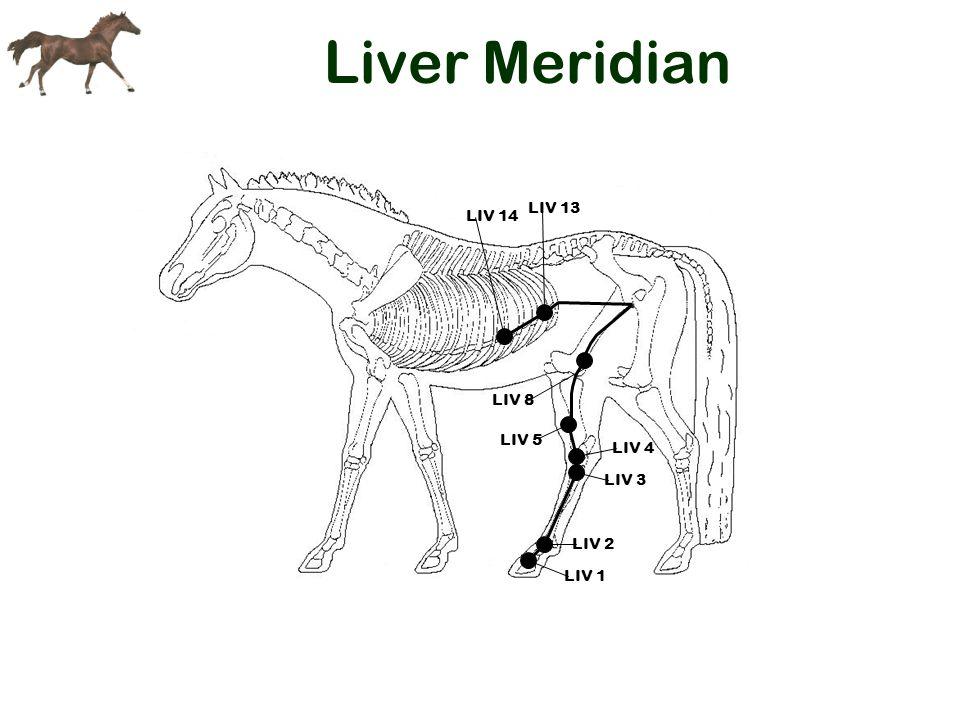 Liver Meridian LIV 14 LIV 13 LIV 8 LIV 5 LIV 4 LIV 3 LIV 2 LIV 1