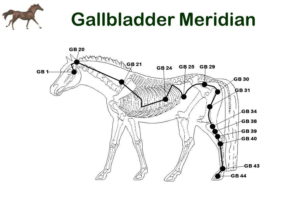 Gallbladder Meridian GB 21 GB 44 GB 43 GB 40 GB 39 GB 38 GB 34 GB 24