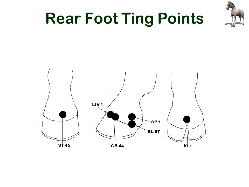 Rear Foot Ting Points SP 1 BL 67 LIV 1 ST 45 KI 1 GB 44