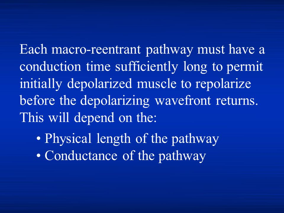 Each macro-reentrant pathway must have a conduction time sufficiently long to permit initially depolarized muscle to repolarize before the depolarizing wavefront returns. This will depend on the: