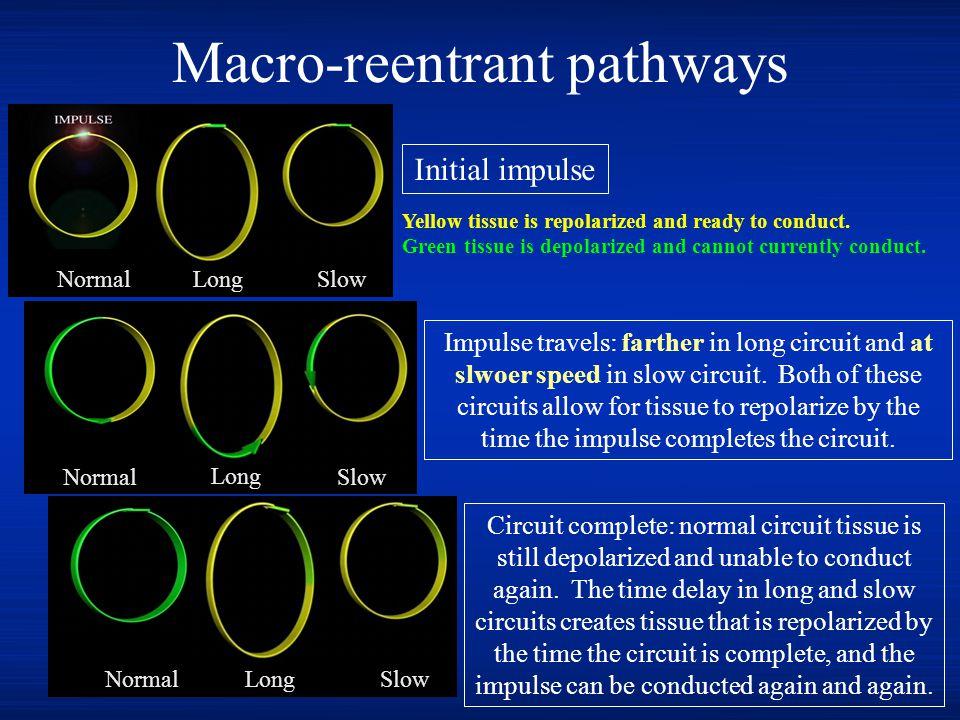 Macro-reentrant pathways