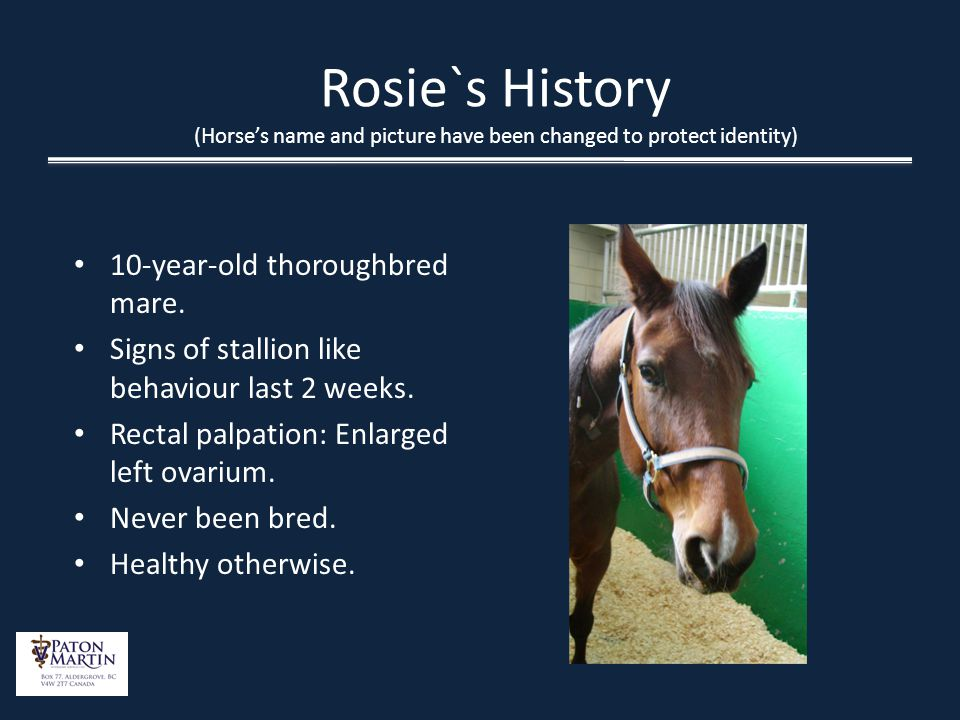 Rosie`s History (Horse's name and picture have been changed to protect identity)