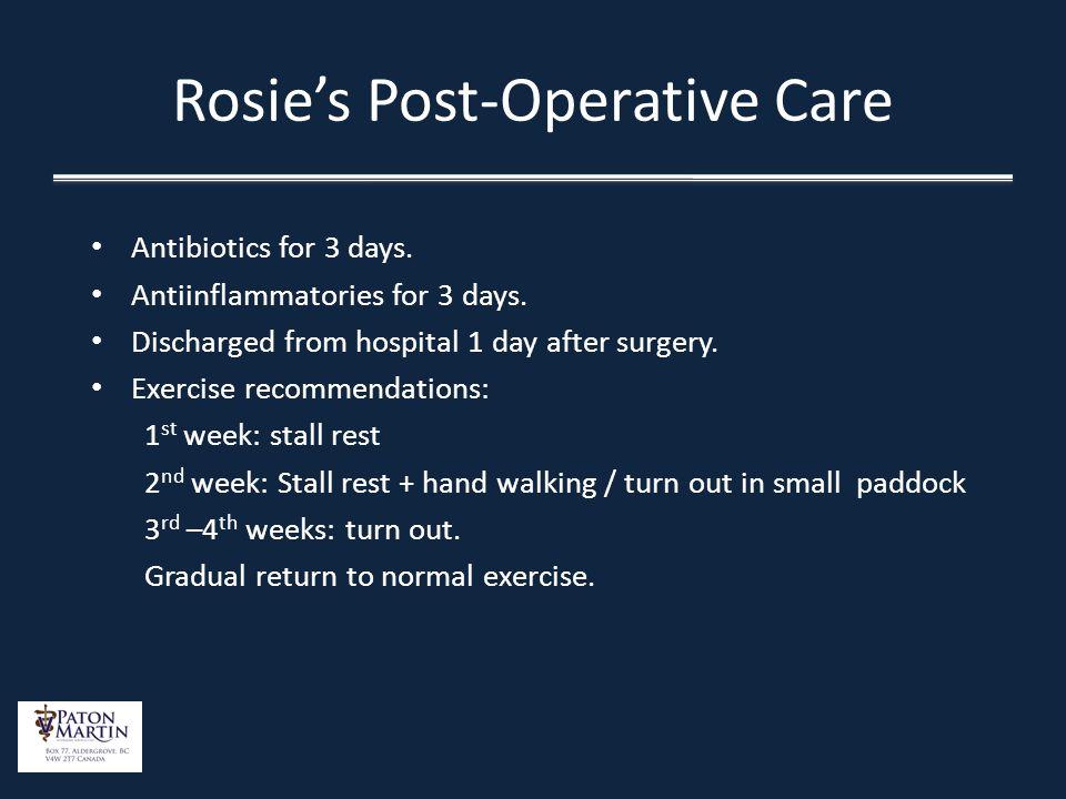 Rosie's Post-Operative Care
