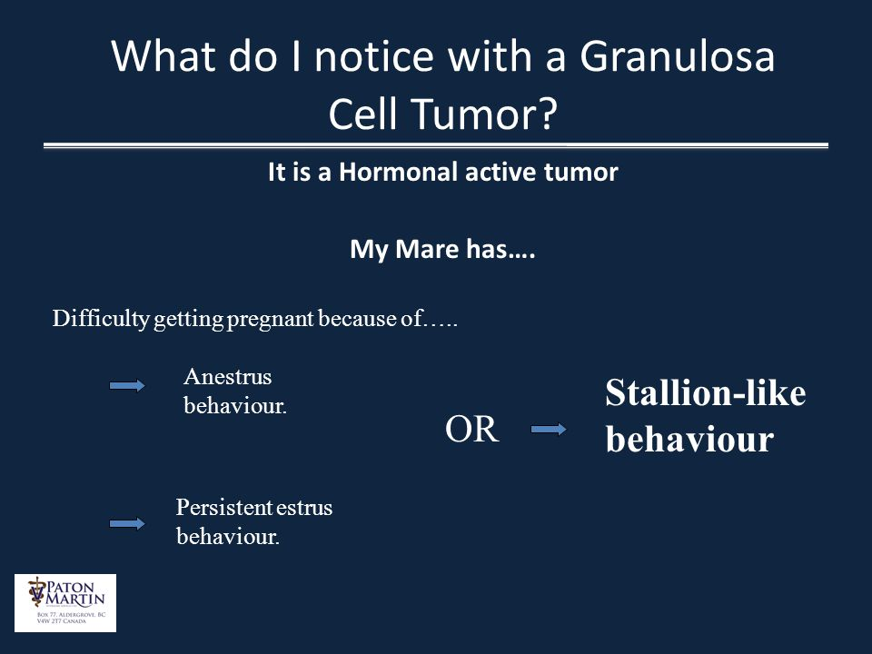 What do I notice with a Granulosa Cell Tumor