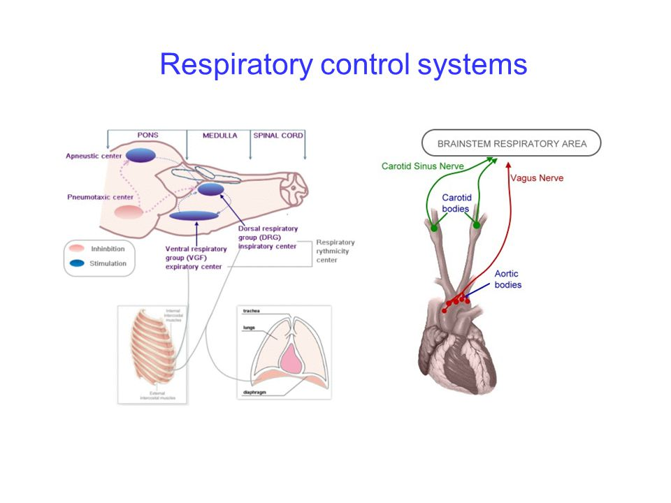 Respiratory control systems