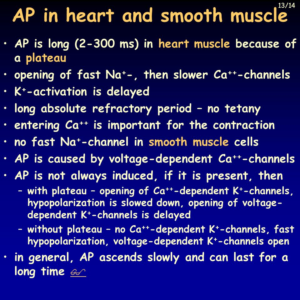 AP in heart and smooth muscle