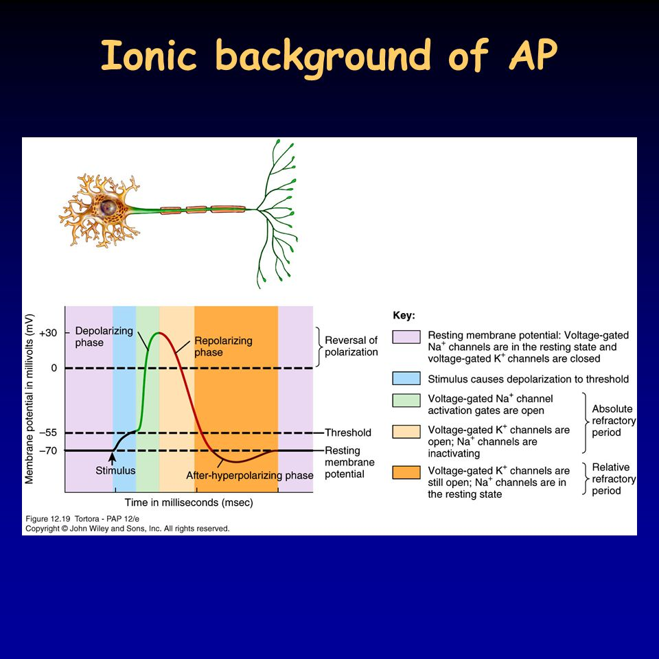 Ionic background of AP 12_19