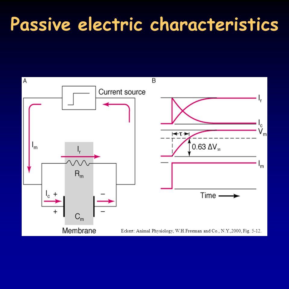 Passive electric characteristics