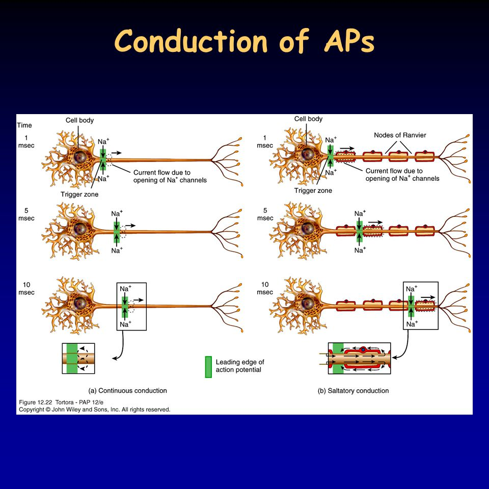 Conduction of APs 12_22