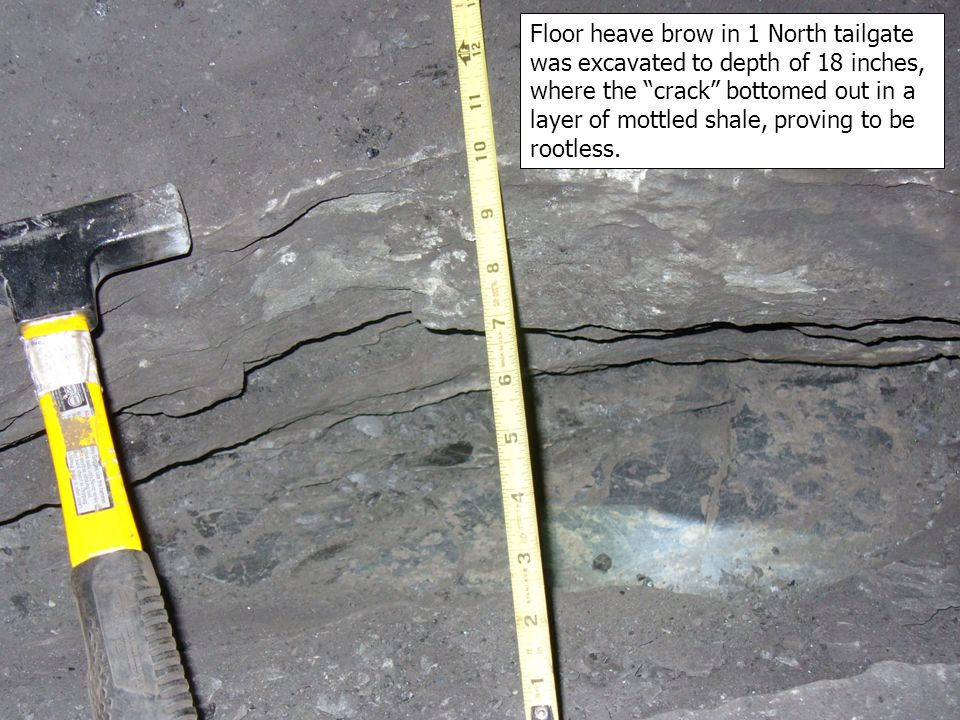 Floor heave brow in 1 North tailgate was excavated to depth of 18 inches, where the crack bottomed out in a layer of mottled shale, proving to be rootless.