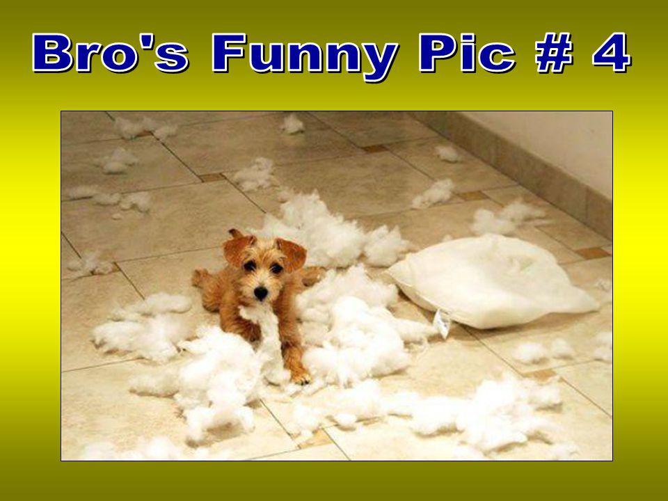 Bro s Funny Pic # 4