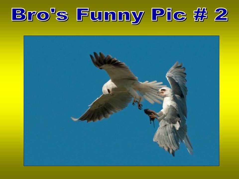 Bro s Funny Pic # 2