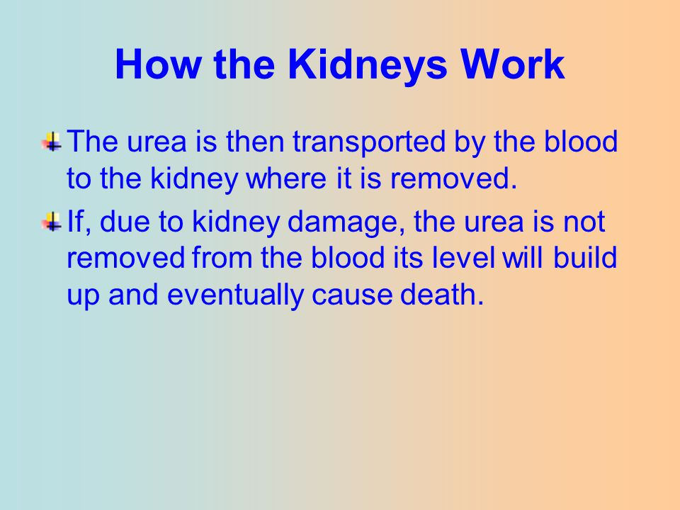 How the Kidneys Work The urea is then transported by the blood to the kidney where it is removed.