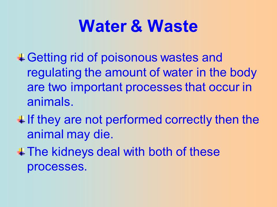 Water & Waste Getting rid of poisonous wastes and regulating the amount of water in the body are two important processes that occur in animals.