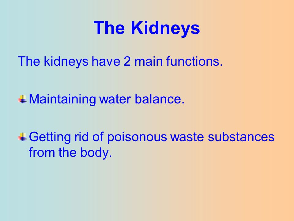 The Kidneys The kidneys have 2 main functions.