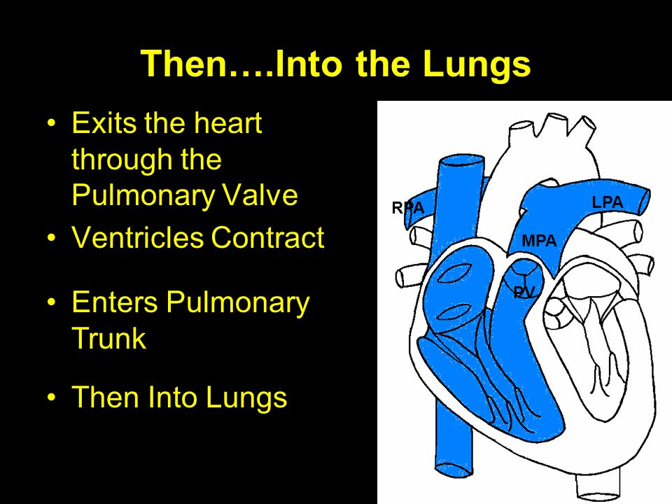 Then….Into the Lungs Exits the heart through the Pulmonary Valve