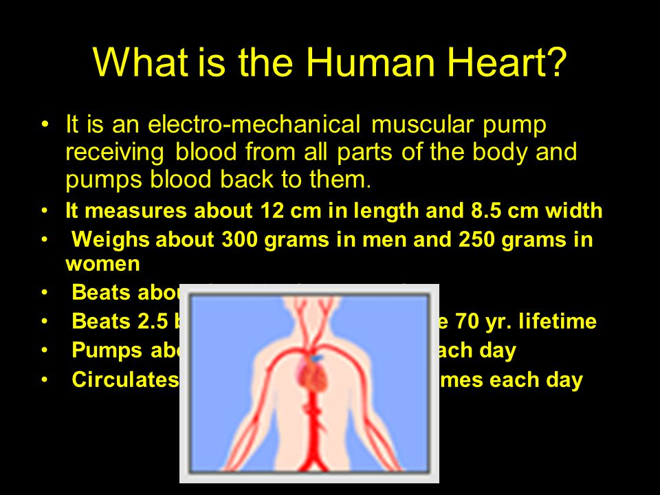 What is the Human Heart It is an electro-mechanical muscular pump receiving blood from all parts of the body and pumps blood back to them.